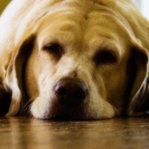 Sleeping Pills Aren't Safe For Dogs | These Alternatives Are!