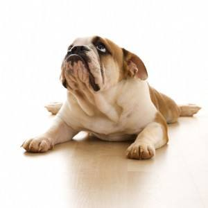 What Can I Give My Dog For Arthritis?