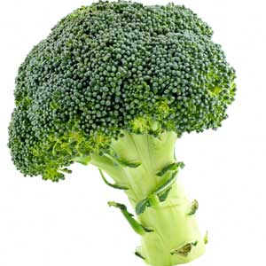 Can I Give My Dog Broccoli?