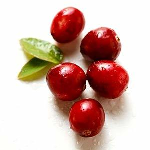 Can I Give My Dog Cranberries?