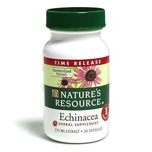 Can Dogs Take Echinacea Will It Help A Hound Best Advice