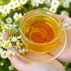 Can Dogs Have Chamomile Tea?