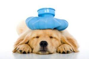Should I Get Dog Health Insurance?