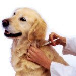 Can Dogs be Vaccinated at Home?
