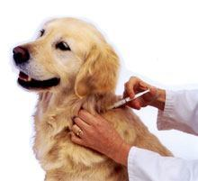Vaccinating a Dog at Home