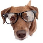 Can I Get My Dog Eyeglasses?