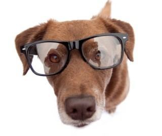 Can Dogs Wear Eyeglasses?
