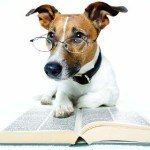 Can I Give My Dog an IQ Test?