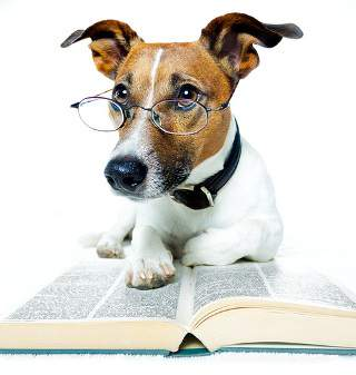Can Dogs Have IQ Tested?