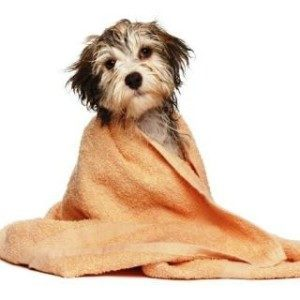 Can I Give My Dog a Bath using Human Shampoo?