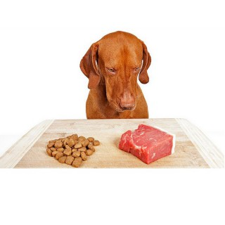 Can I Give My Dog Raw Foods?