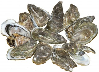 Can I Give My Dog Oysters?