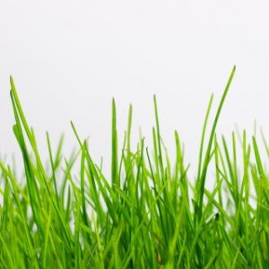 Can I Let My Dog Eat Grass?